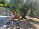 PET FRIENDLY - Podere Ager Mentis